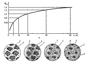Процесс формирования цементного камня